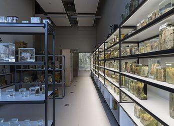 Museum shelves